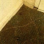 Dead bug carcasses
