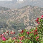 A scenic view of the Hollywood sign