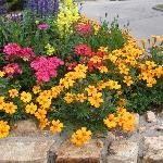 Lovely flowers...