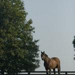 Stallion just enjoying life
