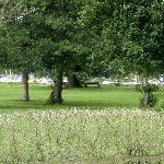 Grounds alongside Lough Neagh