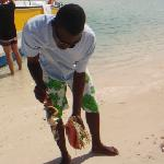 conch shelling