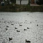 Bird life on the lake.