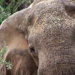 foto dal safari 1