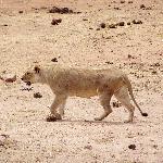foto dal safari 4
