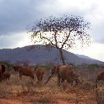 foto dal safari 5