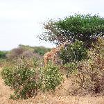 foto dal safari 8