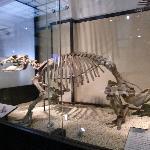 恐竜の実物標本