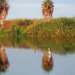 la  bellissima natura della laguna!