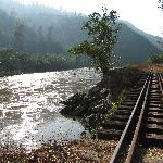 old, unused tracks in Borneo