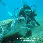 Lidija diving with giant turtle - www.newsonbijou.com -
