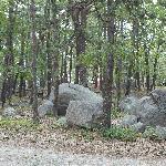 Photo de Cape Ann Camp Site