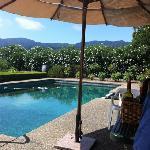 backyard wine tasting by the pool