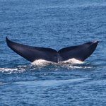 San Diego Whale Watch