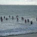 Southport Shivering Shags Making A Splash!