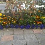 Teresa's flower garden