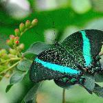 """At """"Butterfly Garden"""""""