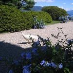 un pavone nei giardini