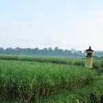 Paddy field in front of Villa Khalia