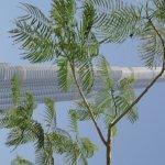 Blick von Pool auf den Burj Khalifa