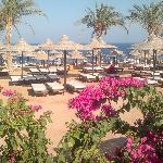 Photo de Poinciana Sharm Resort & Apartments