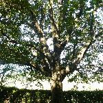 bellissimo albero secolare vicino alla sala da colazione