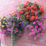 Nice flowers :)