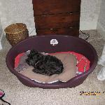 King size dog basket-plus schnauzer.