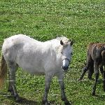 les chevaux de notre hôte