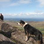 Letterfrack Lodge - nans best friend on Diamond Hill
