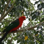 Mapleton Falls Accommodation King Parrot