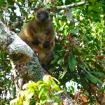 lots of tree kangaroos