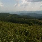 View from peak of Max Patch