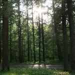 Gilbert Lake State Park Foto