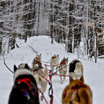 Hands-on mushing adventures