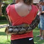 Very large python
