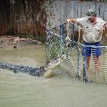 Croc Attck Show