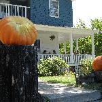 Huge pumpkins on their walk