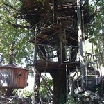 one of many burlwood treehouses!