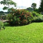 in the hotel's garden