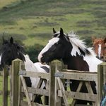 Gorgeous Horses xoxo