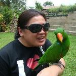malagos bird show parrot