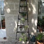 the herb ladder ( I want one )