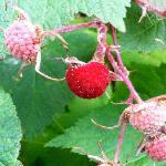 raspberries on driveway