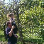 apple picking fall 2010