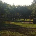 Horseback Riding area