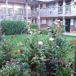 Rose Garden near my room