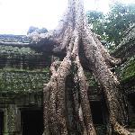 Long long roots