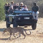 A Leopard next to the vehicle in broad daylight is every safari-goers dream!
