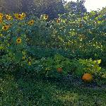 Rossmount Garden - Labor Day Weekend